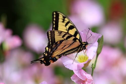 2010 June,Butterfly
